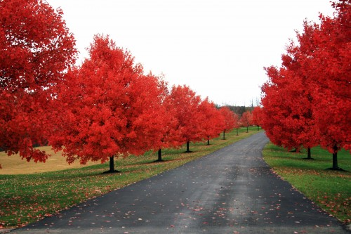 red tree road