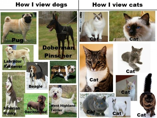 cats vs dogs 500x375 cats vs dogs