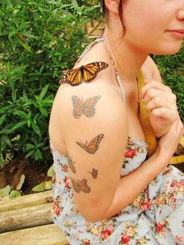 butterfly tattoos with real butter fly 375x500 butterfly tattoos with real butter fly