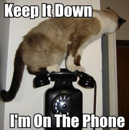 keep it down Im on the phone 495x500 keep it down, Im on the phone
