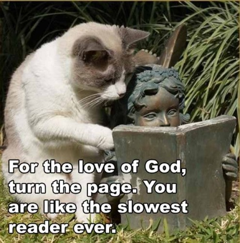 turn the page 495x500 turn the page