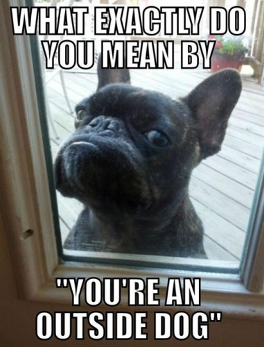 what exactly to you mean by youre an outside dog 381x500 what exactly to you mean by youre an outside dog