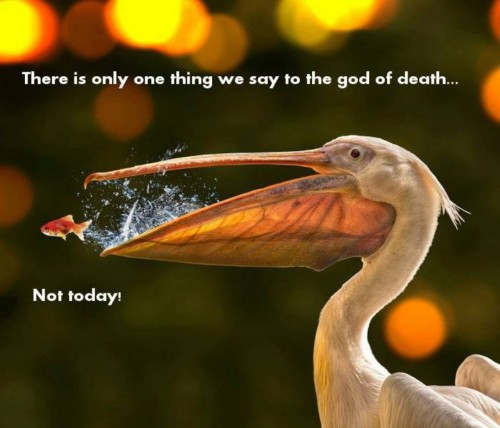 There is only one thing we say to the god of death...NOT TODAY 500x428 There is only one thing we say to the god of death...NOT TODAY