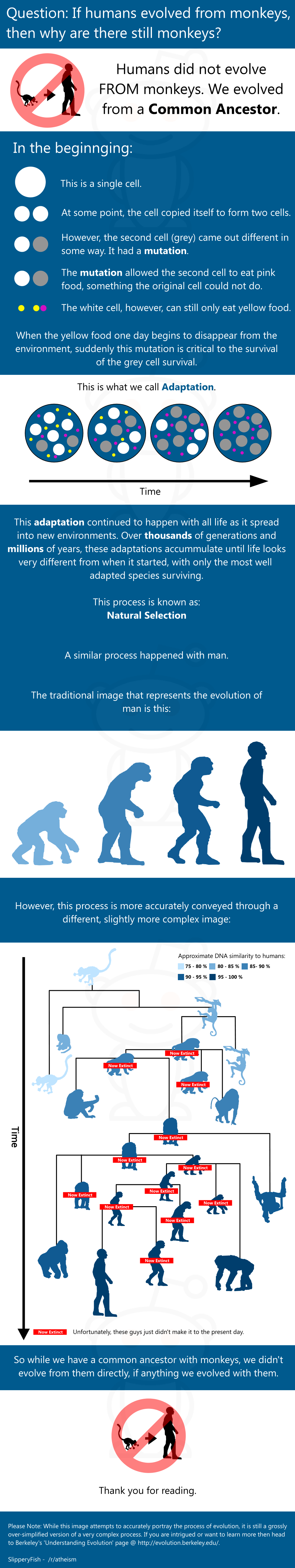 understanding how human being are evolving