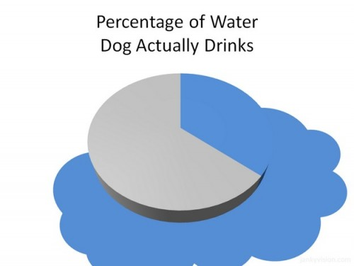 percentage of water dogs actually drink 500x375 percentage of water dogs actually drink