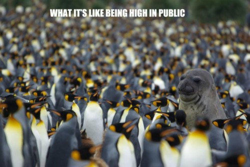 what its like being high in public 500x334 what its like being high in public