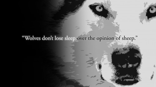 wolves dont lose sleep over the opinion of sheep 500x281 wolves dont lose sleep over the opinion of sheep