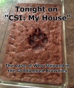 csi my house who stepped in the goddamned brownies 254x300 csi   my house   who stepped in the goddamned brownies