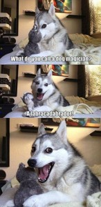 what do you call a dog magician 146x300 what do you call a dog magician