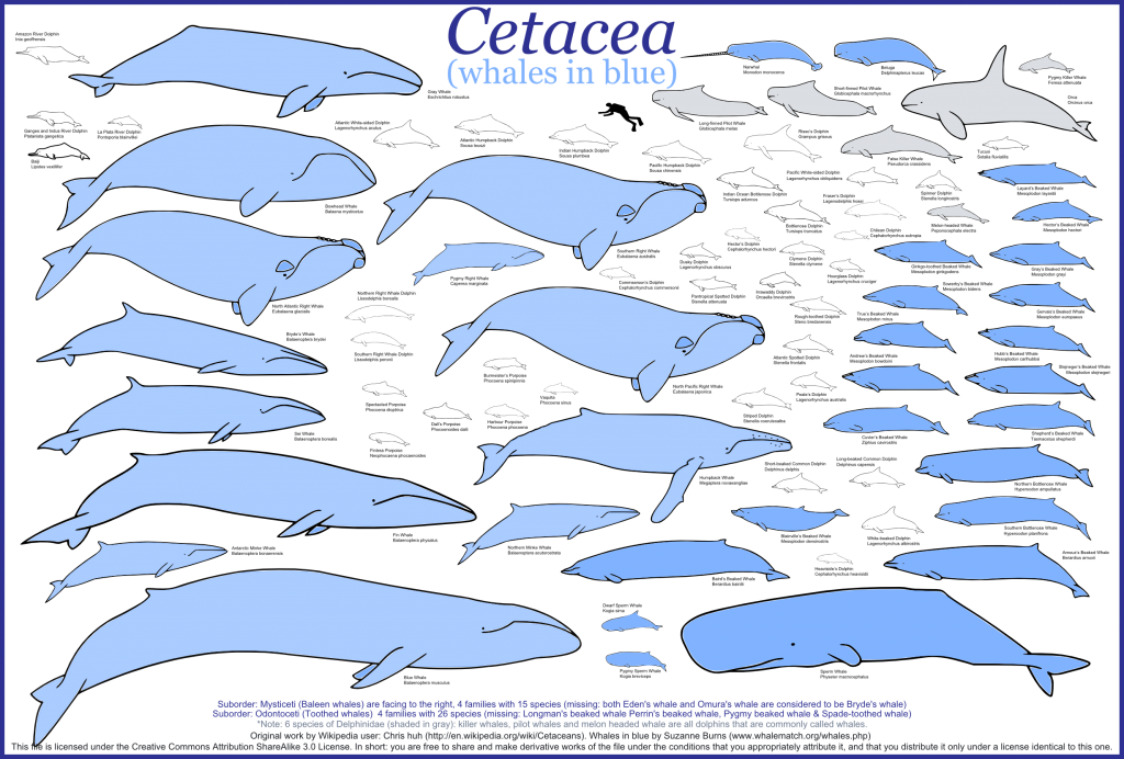 Whales in blue 1024x692 Whales in blue