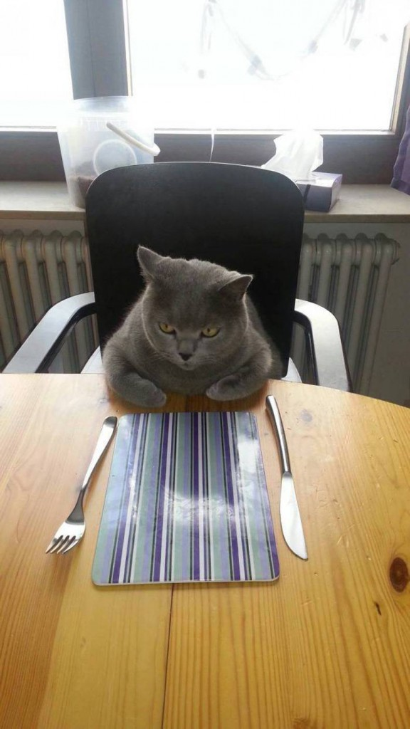 angry dinner cat 576x1024 angry dinner cat