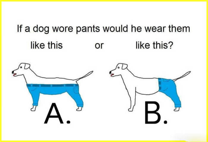 if a dog wore pants if a dog wore pants