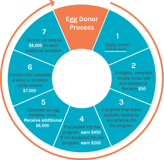Egg Donor Process Egg Donor Process