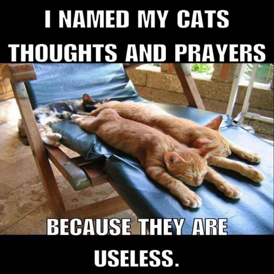 I named my cats thoughts and prayers I named my cats thoughts and prayers
