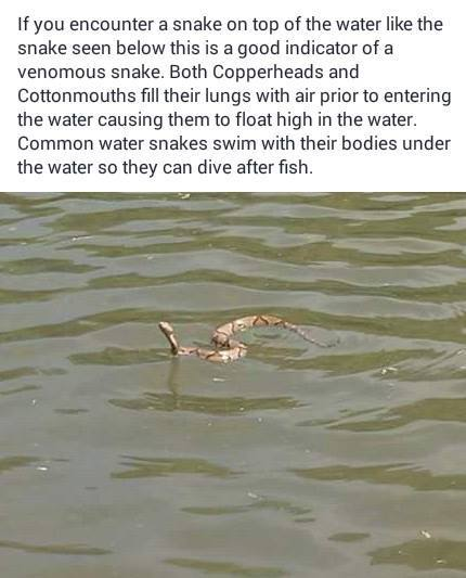 Snakes on water