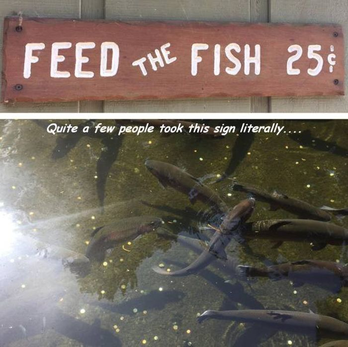 feed the fish feed the fish