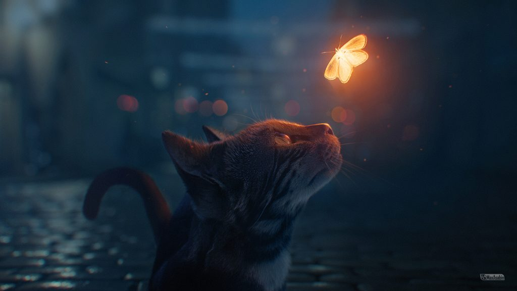 Cat looking at fire butterfly