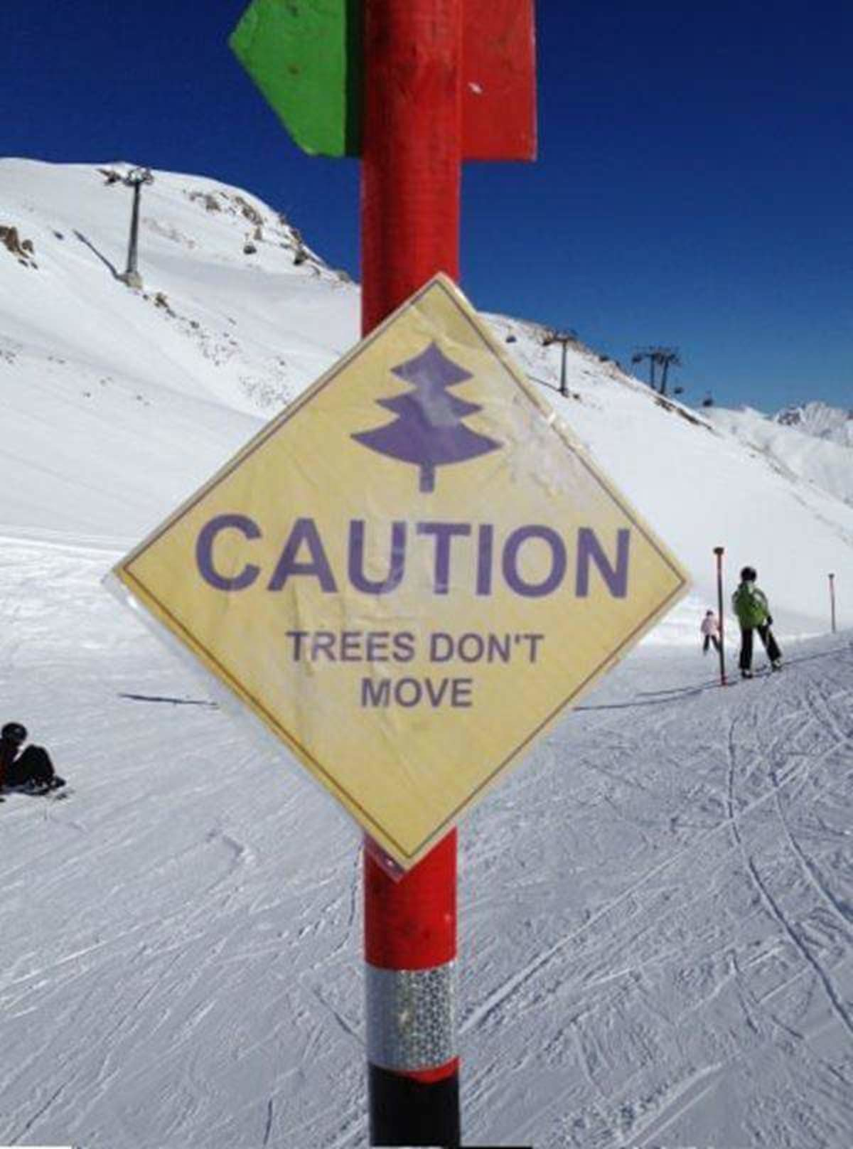 caution trees don't move.jpg