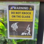 727267 150x150 Do not knock on glass